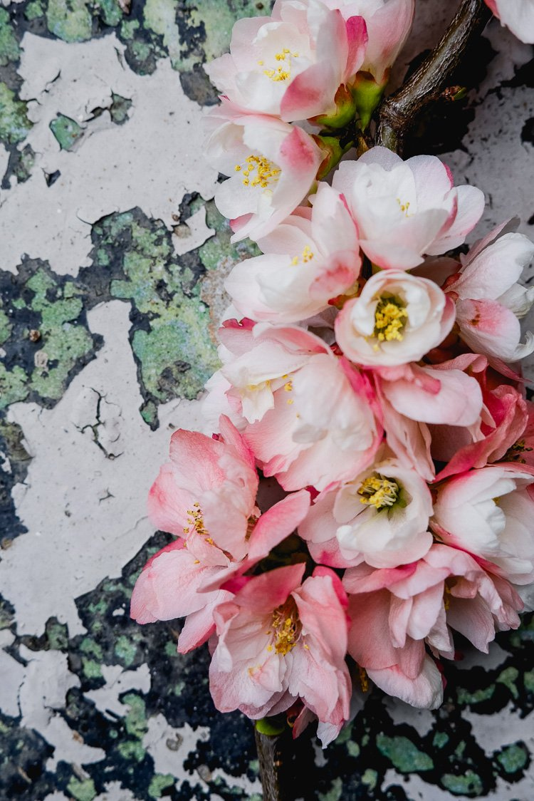 floral blossom via perfectly imperfect living