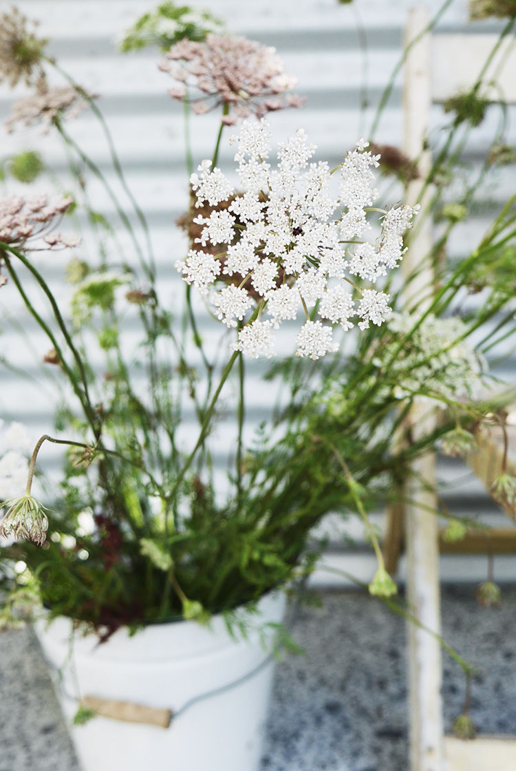 wild flower foraging via perfectly imperfect living