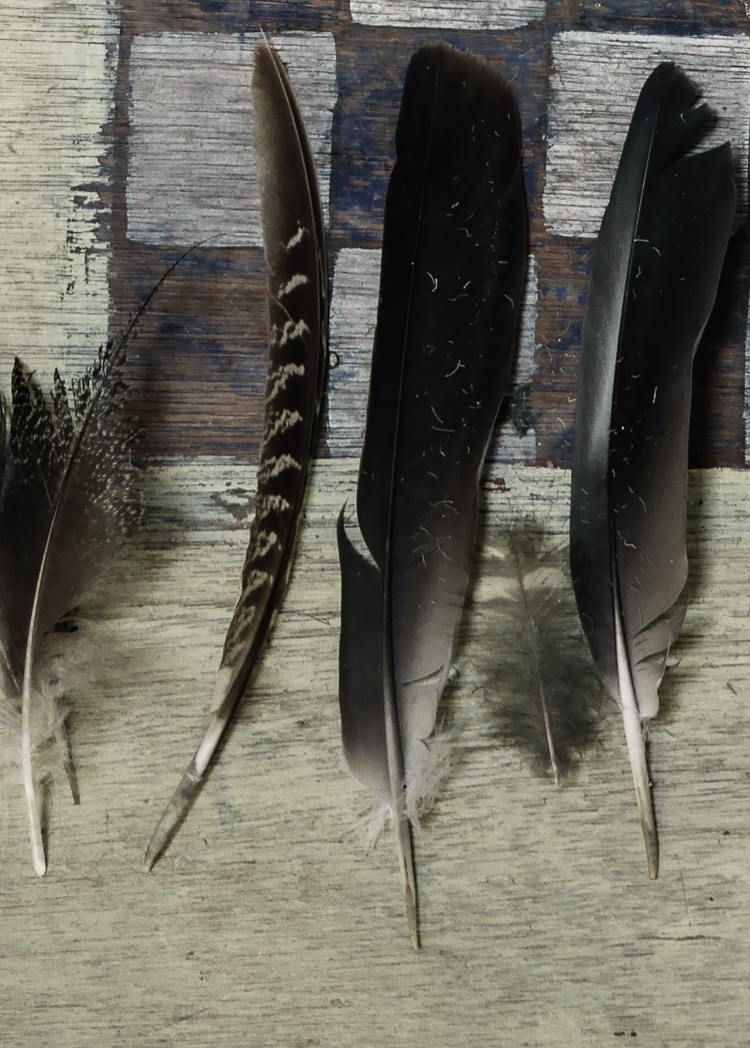 feather collection via perfectly imperfect living