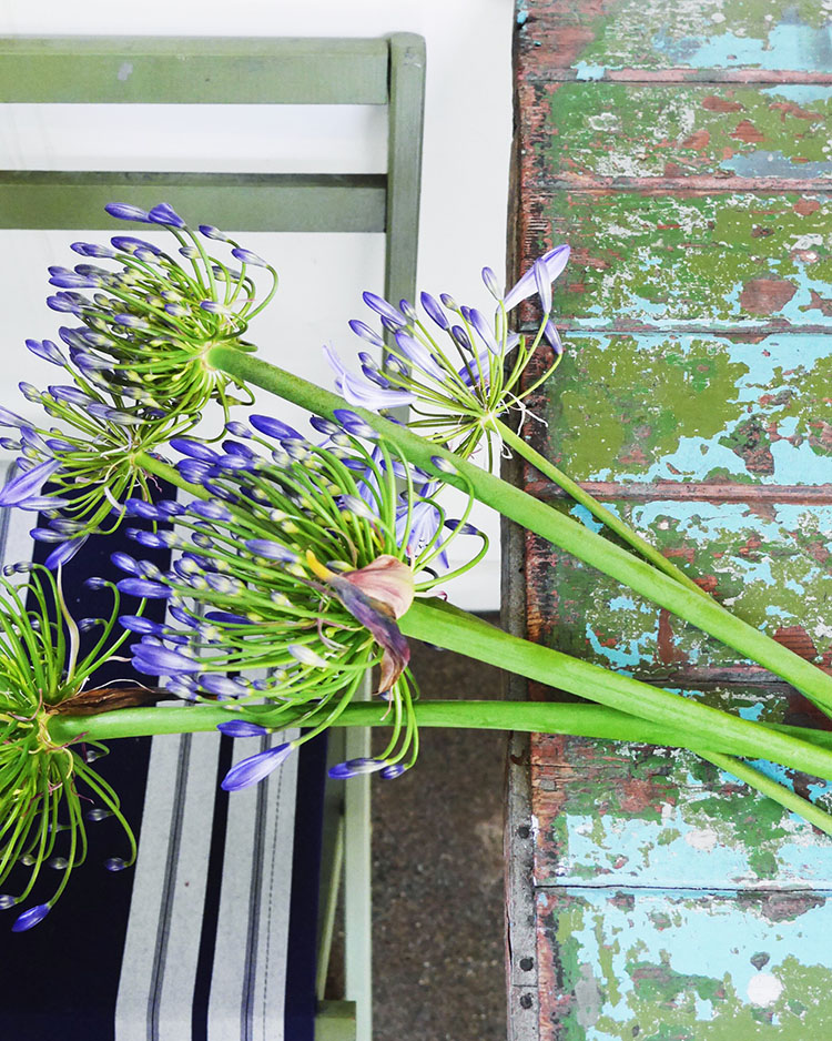 agapanthus and paintchipped table
