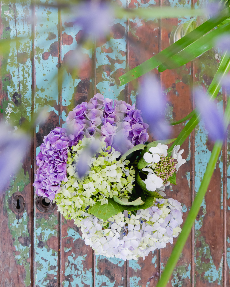 hydrangeas via perfectly imperfect living