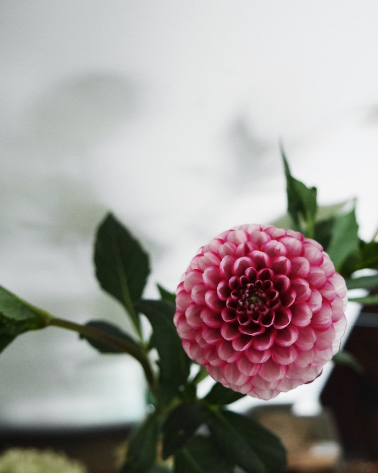 dahlia via perfectly imperfect living