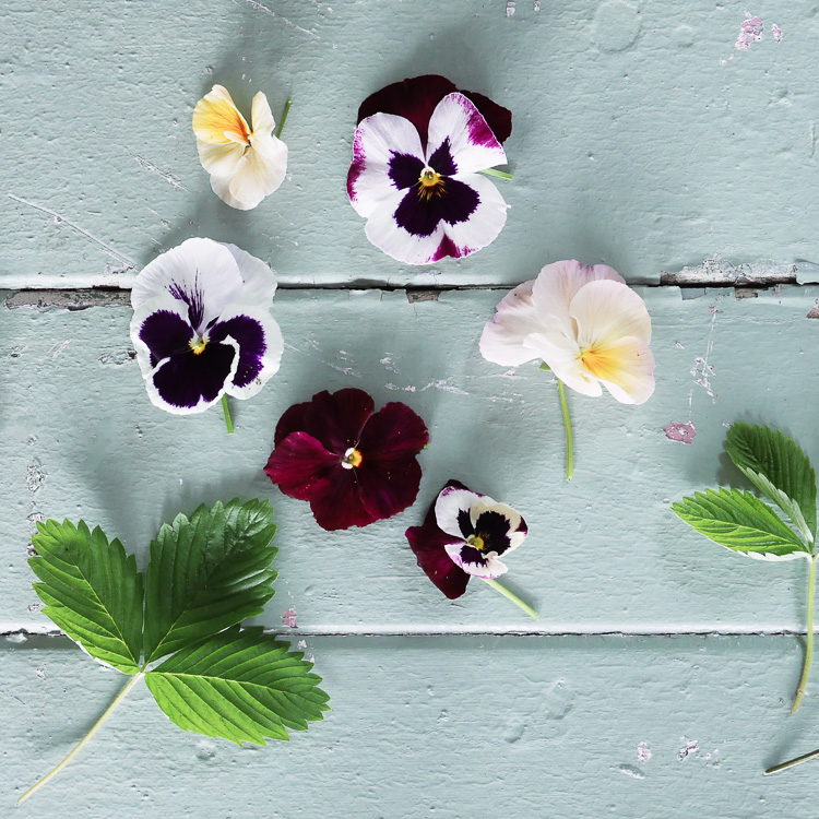 pansies via perfectly imperfect living